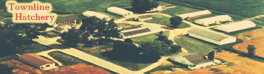 Townline Poultry Farm