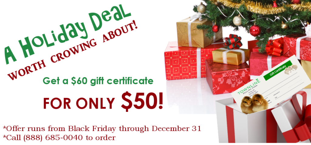 Get a $60 gift certificate for just $60 for the month of December!