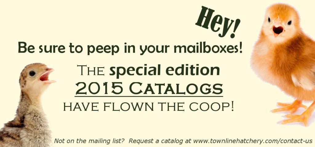2015 Catalogs