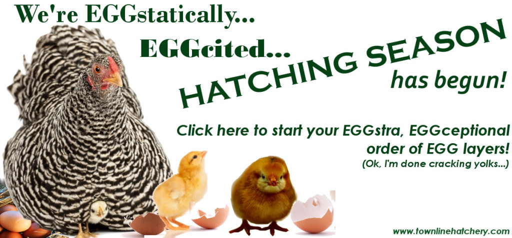 Hatching Season has Begun